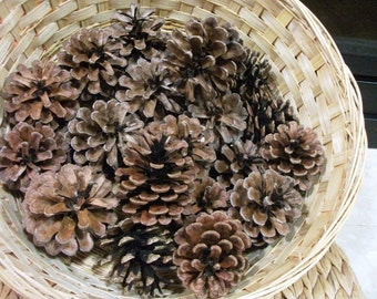 50 NORWAY PONDEROSA PINECONES 3-4 inches tall, great for Fall Weddings, Thanksgiving events, Christmas Decor, Wreaths, Art Projects, Crafts