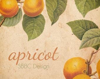 OOAK Etsy Shop Banner Set, Premade Design - Vintage Botanical Fruit