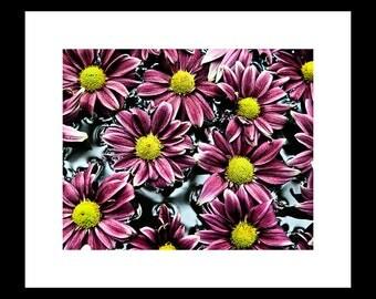 Chrysanthemums 8X10 Custom Print