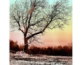 Winter.Star.Tree...16x20 matted fine art landscape photograph / giclee print