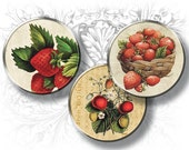 Strawberry Vintage Images 1 Inch Circles Digital Collage Sheet Download and Print