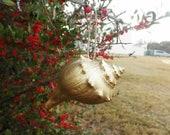 one Gold Conch Ornaments Atlantic Ocean