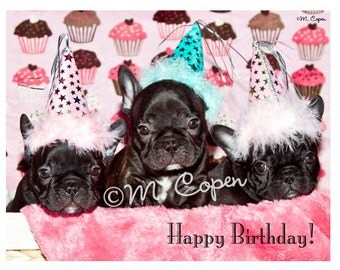 Happy Birthday French Bulldog Cards - Set of 4 Cards