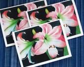 pink amaryllis blank cards set of three