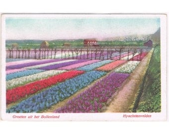 2 Vintage Holland Postcards - Bulb Fields with Flowers - Netherlands - Europe