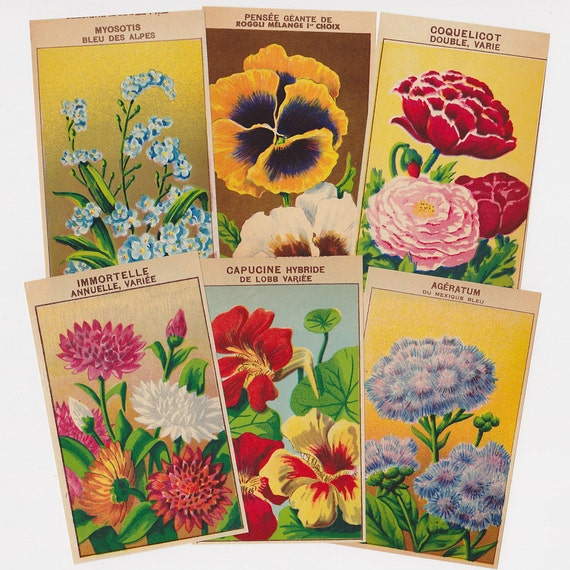Flower Packet Labels Vintage French 72 All Different