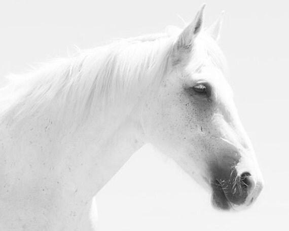 Dreamy Horse Art, White Horse Photograph, Nursery Wall Art