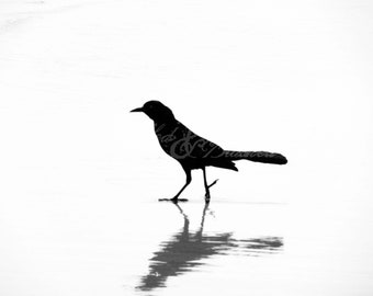 Holden Beach-Birds- Wavering Reflection: Fine Art Photography