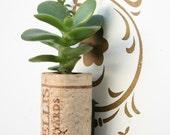Succulent Cork Magnet, Trellis Jade