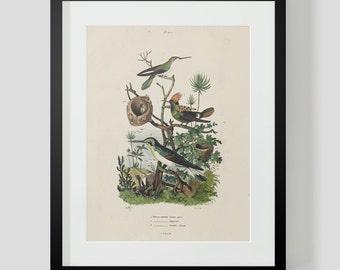 Hummingbird Plate 420