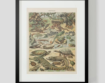 Vintage French Print of Reptiles