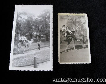 "Vintage Fifties Photos Bronx Zoo  1955 and 1959 Fifties Largest is  3 1/2"" x 6"" Riding the Camel"