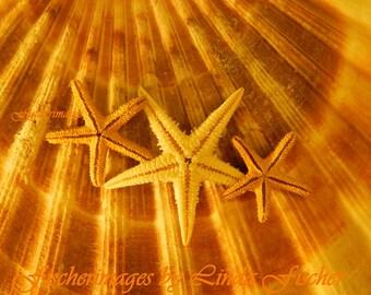 Starfish Shell Macro Fine Art Photograpy