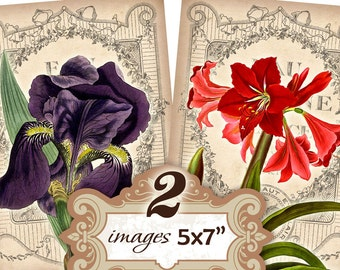 Flowers with vintage french background Iris Amarilis 5 x 7 inch Greeting cards Shabby Paper Scrapbook (350) Buy 3 - get 1 free