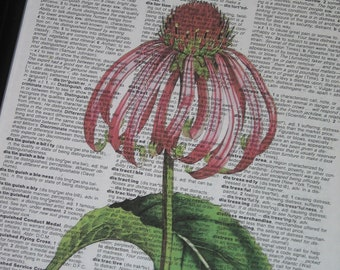 Dictionary Art Print Cone Flower Dictionary Art Print Botanical Art Print Vintage Dictionary Page Print Upcycled
