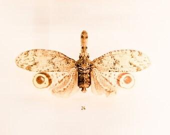 Butterfly Photography, Moth, Still Life, Nature Photography, Natural, Neutral Wall Art, Cream Brown, Wall Decor, Garden Art, Natural History