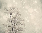 Nature Photography Winter Art: First Snow Fine Art Photography Snow Bokeh, Tree Wall Art, Nature Wall Art, Nature Photography White Grey art
