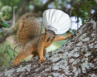 """Squirrel Chef - Fine Art Print - Kitchen Quote Cooking Baking Red Squirrel """"Where there's Smoke, there's Toast"""""""
