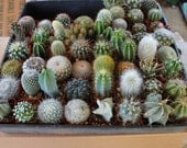 """10 Very Cool Cactus in 2"""" plastic containers Great for Party or Wedding Favors and Gifts cacti succulents table decor favor"""