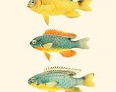 Vintage Fish Print 8x10 P206