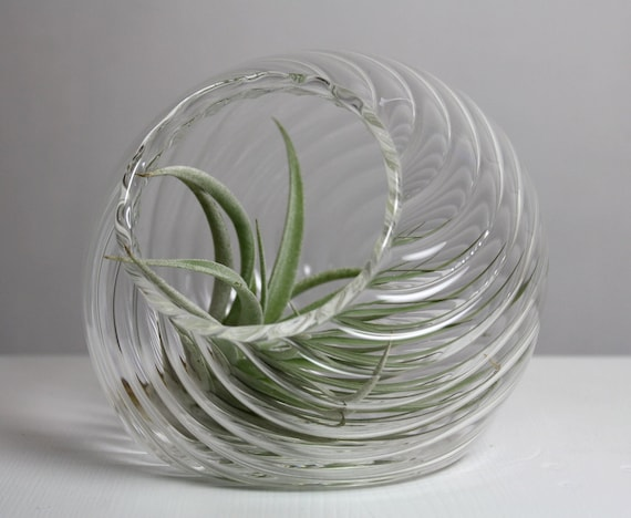 sitting optical twist air plant terrarium