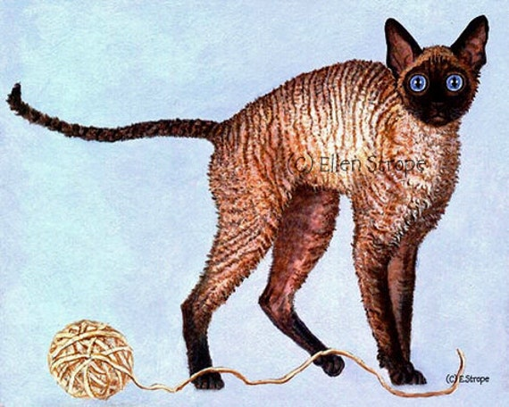 CARD, cats, exotic cats, cat decor, castteam, Ellen Strope, note cards, greeting cards, art, blank cards