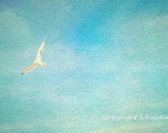 Seagull Photograph Bird in Flight Zen Blue Sky Over Beach White Gull Flying Nature Bird Print 12x8