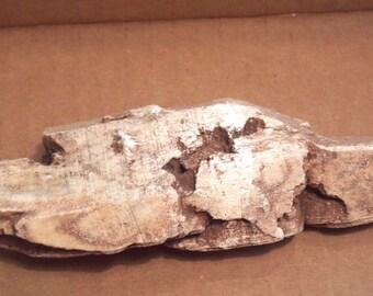 Edenite specimen