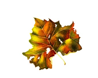 Autumn Leaf, watercolor painting