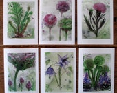 Woodland Botanical Art Prints Set of Six Watercolor Greeting Cards