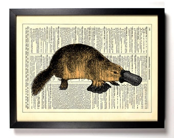 Duck Billed Platypus,Home, Kitchen, Nursery, Bath, Office Decor, Wedding Gift, Eco Friendly Book Art, Vintage Dictionary Print, 8 x 10 in.