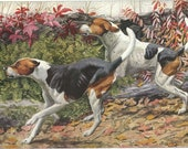 Foxhounds Dog Print 1910s Louis Agassiz Fuertes English Foxhound American Foxhound
