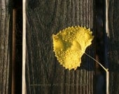 Dock Landing, Yellow, Fall Leaf, Photography Print, 6 x 9 + More Sizes, Heart Shaped, Raindrops, Autumn Leaves, Brown, Wooden Pier, Wall Art