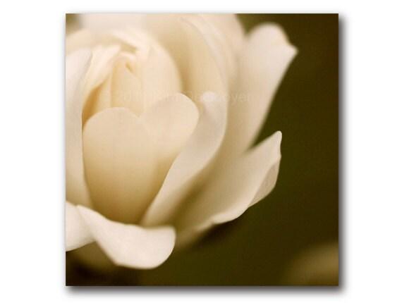 Spring Magnolia Flower photo, sepia magnolia, velvet, cream, brownt, olive, soft  blossom, floral, original photograph