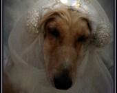 PDF Pattern Princess of Wales Dog Snood