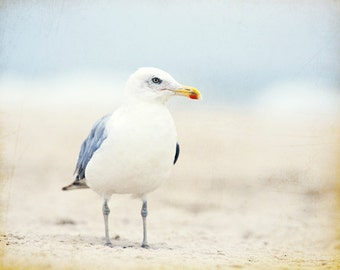 "Seagull Photography - bird beach photography light blue cream white beige coastal wall art seashore - 11x14, 8x10 Photograph, ""Beach Bum"""
