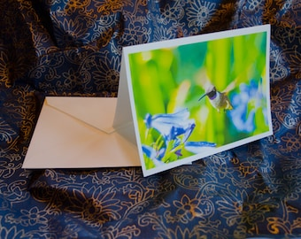 "One single, 5 1/2 x 7 3/8 Blank Photo Notecard with Envelope, ""Royal Hummingbird"""
