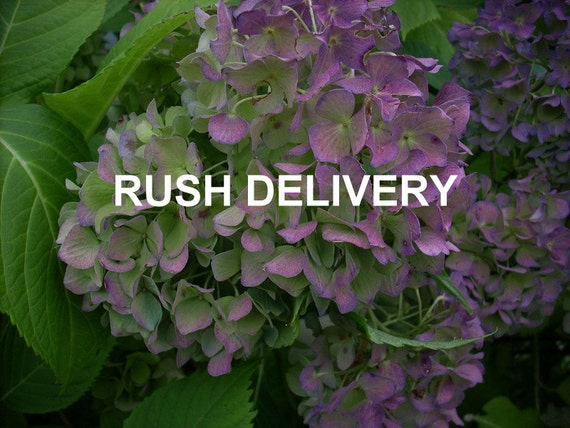SHIPPING UPGRADE - Rush Delivery for 3 Sign order