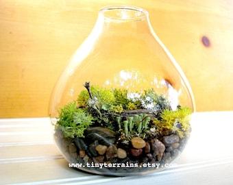 Lichen Terrarium : Small Teardrop Woodland Lichen Terrarium
