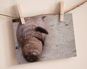 """Greeting Cards Thinking of You Blank Photograph """"Yes, Even Seals Laugh"""""""