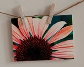 """Greeting Cards Set of TEN """"Coral Summer Echinacea"""""""