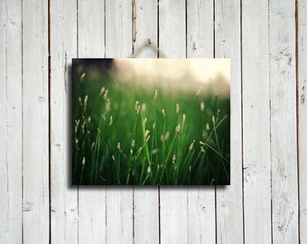 The Grass is Greener - 16x20 canvas print - Green decor - Green photography - Green art - Green decoration