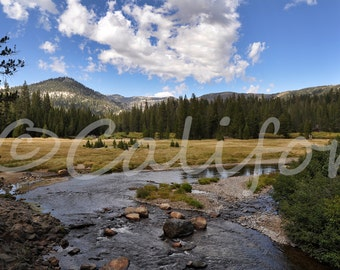 Over the Meadow and Through the Woods a 11x14 photograph of California Wood Lands