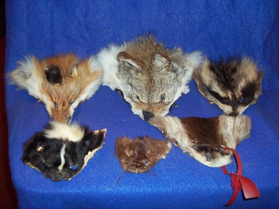6 real animal fur Tanned face head skin pelt parts