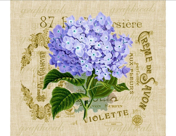 Purple hortensia hydrangea French ephemera digital download image for transfer to fabric burlap paper pillows cards No. 615