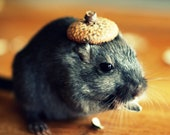 Refrigerator Magnet Rectangle Gerbil in A Hat Acorn Cap