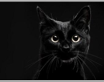 4 Autumn Halloween Black Cat Kitten Cats Kittens Greeting Notecards/ Envelopes Set