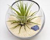 ZODIAC SAGITTARIUS terrarium - etsy ny, home decor, baby shower, sagittarius, birthday gift, horoscope, terrarium, terranium, air plant
