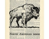 Bison Buffalo Dictionary art vintage animal on Upcycled Vintage Dictionary Paper - 7.75x11