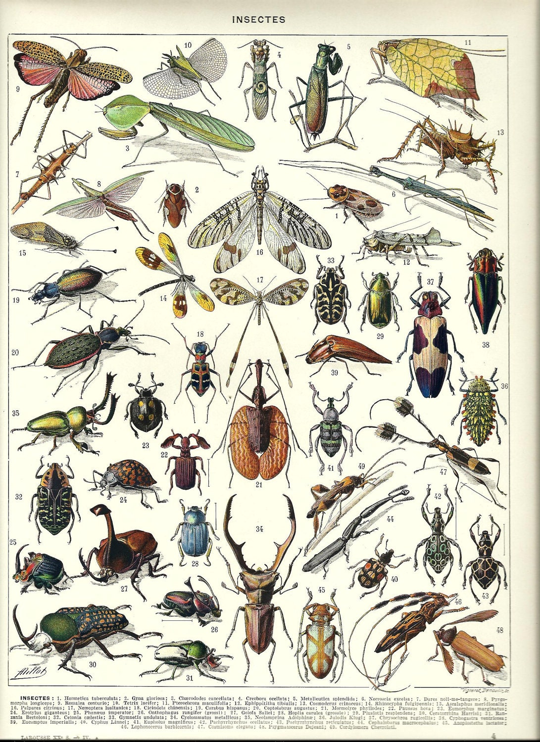 Vintage Insect 33